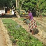 Bocaranga Si innaffia il giardino