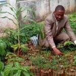 Mbuji-Mayi piantagione_3