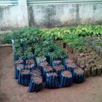 Mbuji-Mayi piantagione_4